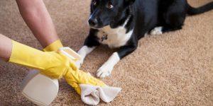 Removes carpet odor