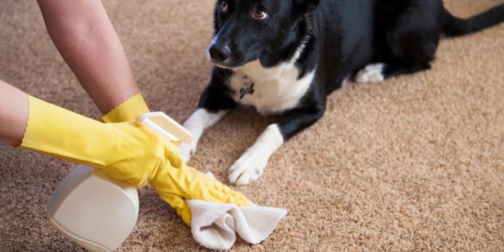 روشهای رفع بوی فرش