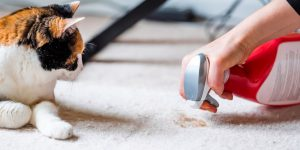 Clear the animal's urine spot