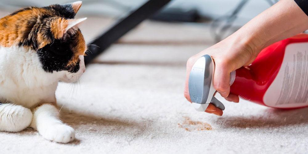 پاک کردن لکه ادرار حیوانات از روی فرش